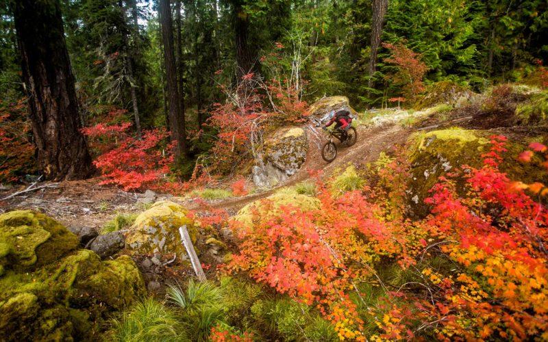 Trans Cascadia Mountain Bike Excursions